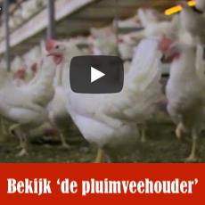 https://hetscharrelei.nl/de-pluimveehouder-2/